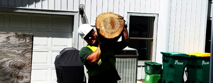 Arborist tree service carrying tree stump