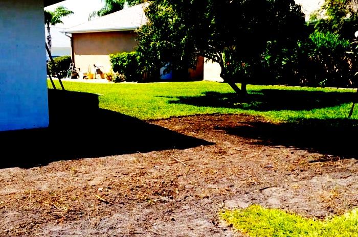 Exposed soil ready for new sod