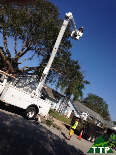Full tree services Rockledge FL