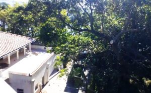 Another view from a ladder of the area of trees that had to be trimmed